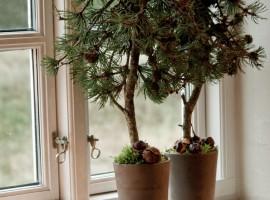 Juletræer-2