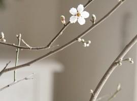 Springinside1