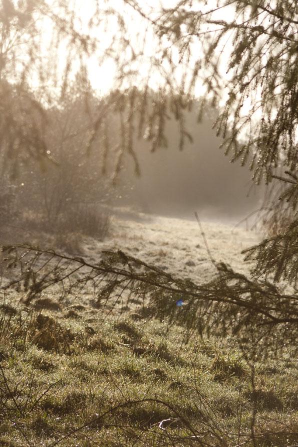 Springmorning1