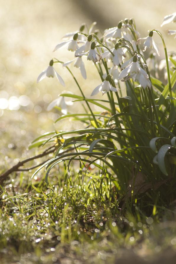 Springmorning5