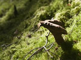 Skovbund