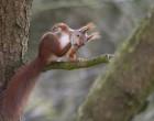Egern1
