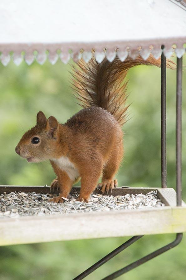 egern3