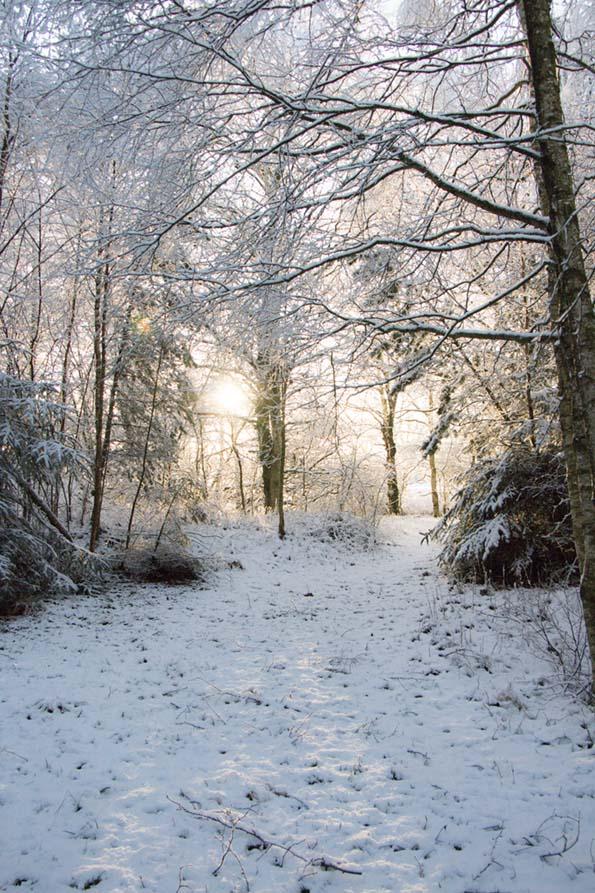 winter-december-11