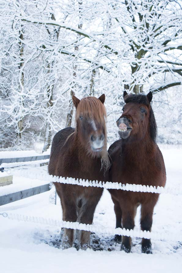 winter-december-15