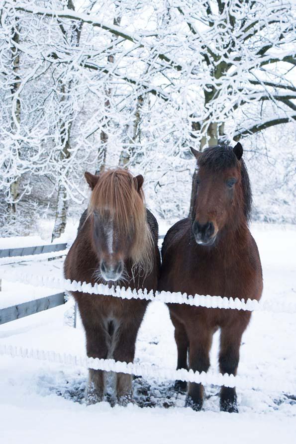 winter-december-16