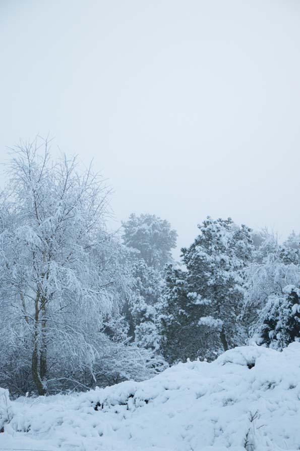 winter-december-18
