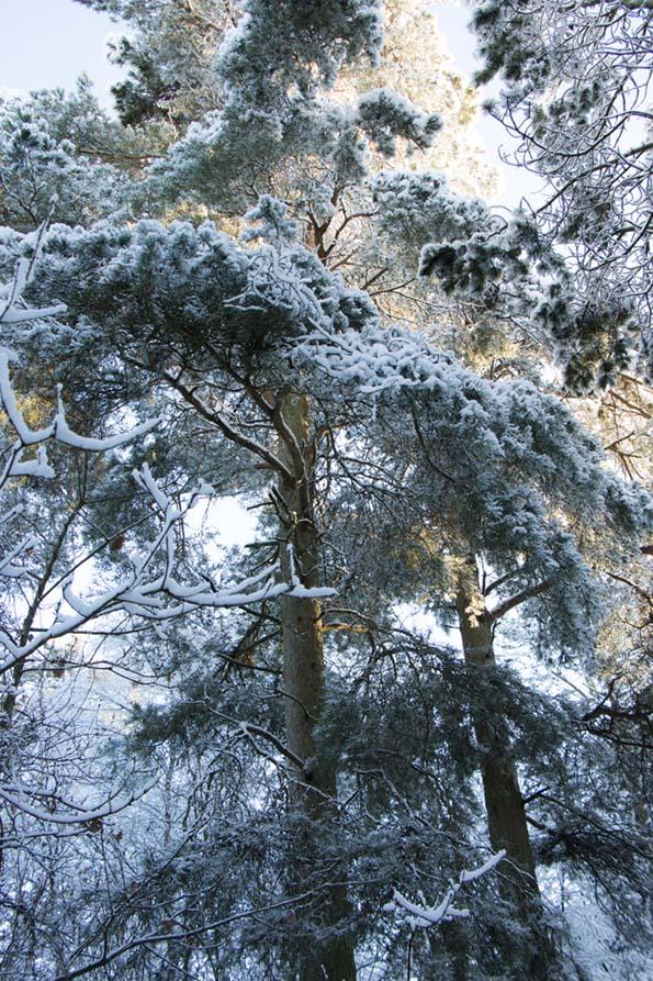 winter-december-6