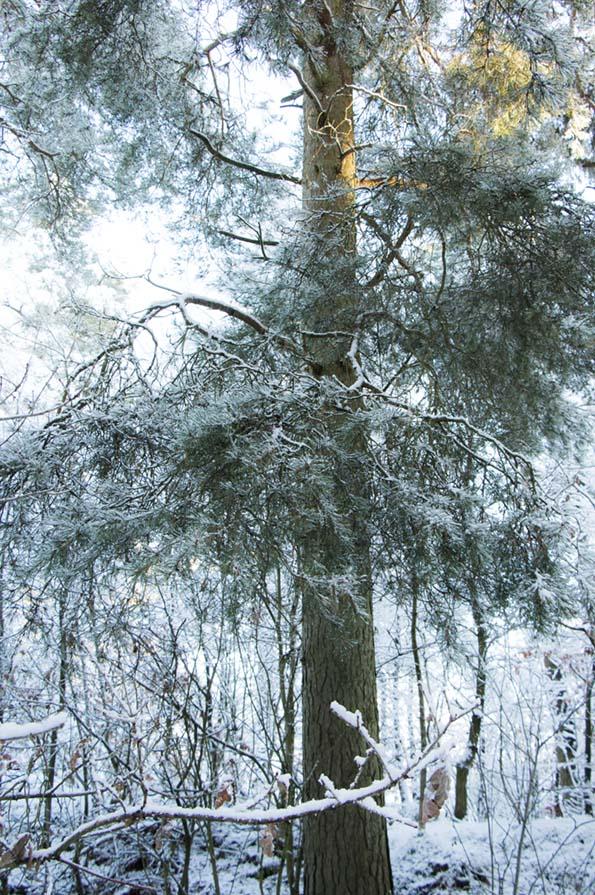 winter-december-7