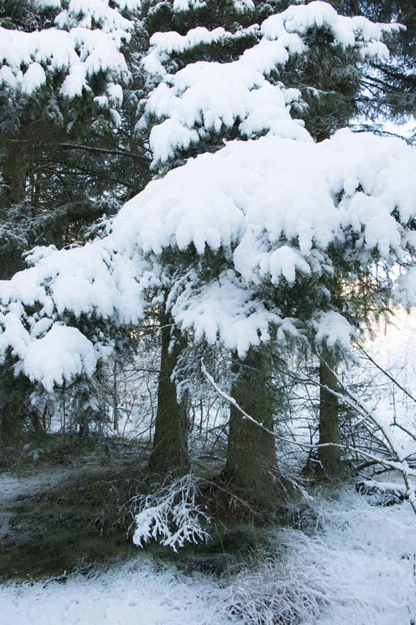 winter-december-8