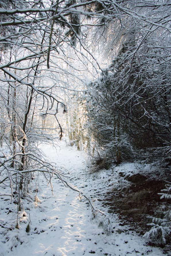 winter-december-9